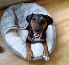 """Shamontiel wrote """"Regurgitation, urination, other rocky moments in puppyhood ~ Is your dog really sick or does she just want to play?"""" #dogowner #doglover #dogmom #dogdad #doghealth #pets #pethealth (Photo credit: Shamontiel L. Vaughn) Super Cute Dogs, Pet Health, German Shepherd Dogs, Dog Owners, Dog Mom, Photo Credit, Sick, Labrador Retriever, In This Moment"""