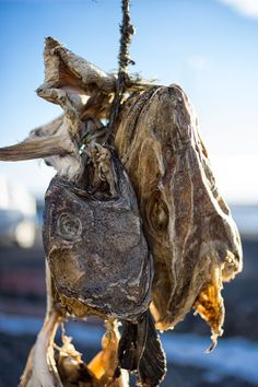 Dried fish Icelandic style