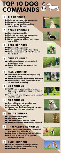 Dog Training Tips, Dog Commands Training, Training Videos, Dog Facts, Dogs And Puppies, Doggies, Dog Rules, Therapy Dogs, Dog Behavior