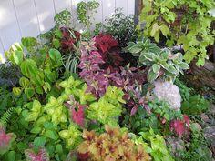 Plantes lumineuses pour coin ombragé