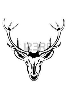 chevreuil: une illustration de la tête d'un animal avec des cornes artiodactyle