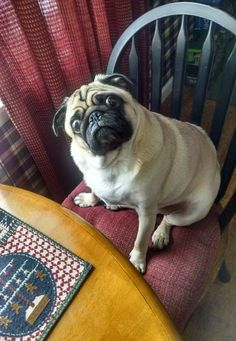 """Whaddya mean I just ate?"" facebook.com/sodoggonefunny"