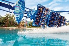 Immerse yourself in wonder at SeaWorld® Orlando, where the aquatic world comes alive. Moving To Florida, Florida Travel, Vacation Destinations, Vacation Spots, Discovery Cove Orlando, Island Of Adventure Orlando, Busch Gardens Tampa, Orlando Theme Parks