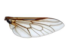 Insect Wings, Insects, Art, Art Background, Kunst, Performing Arts, Art Education Resources, Artworks