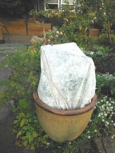 How to control leaf miners when planting fall items like spinach, beats and chard by Cool Season Gardener >> Spinach Leaves, Backyard Farming, Urban Farming, Planting, Beats, Seasons, Fall, Garden, Outdoor Decor