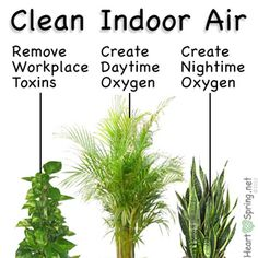 Air filter plants