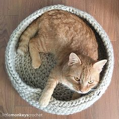 Easy Pet Bed Free Crochet Patterns A set of Straightforward Pet Mattress Free Crochet Patterns. Crochet these pet mattress to your cats or canine that your little fur relations can't re. Chunky Crochet, Chunky Yarn, Chat Crochet, Crochet Cats, Free Crochet, Cat Basket, Knitted Cat, Owning A Cat, Crochet Pillow