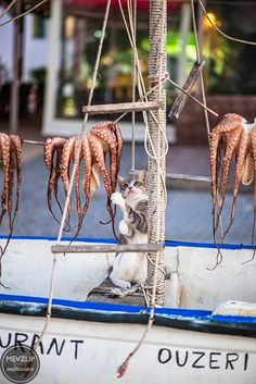 Calamari for dinner tonight, Kos Island, Greece. Kos, one of Greece's Dodecanese Islands, is known for its abundant sandy beaches. It's also rich with Greek and Roman antiquities, particularly in and around busy Kos Town. This harbor city is dominated by the 15th-century Castle of the Knights fortress. It's also home to the Kos Archaeological Museum, the Ancient Agora ruins, and the 3rd-century Casa Romana villa with its lavish mosaics.