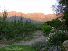 Tulbagh, Western Cape, South Africa Continents, South Africa, The Good Place, Cape, African, Memories, Mountains, Country, Places
