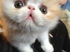 Cutest kitten!!