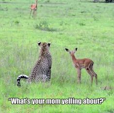 Funny Friday: What's your mom yelling about?