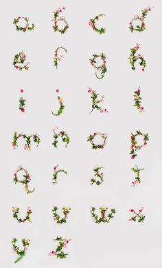 floral alphabet / anne lee.