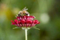 White House responds to massive honeybee decline Love Garden, Garden Care, Garden Ideas, Red Cottage, Garden Cottage, Strawberry Patch, Flower Company, Wild Strawberries, Purple Lilac