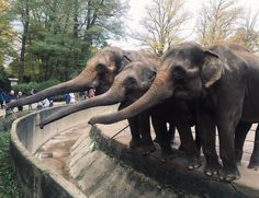 🐘 Heute war der perfekte Tag um Elefanten zu füttern, so wie jeder Tag eigentlich. 😉 Wir wünschen euch einen gemütlichen Sonntag Abend! #pinkmilk #pinkmilkshop #sonntagsausflug #sundayfunday #zooausflug