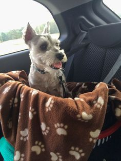Picture and directions for Cheap Safe Dog Car Seat. diy