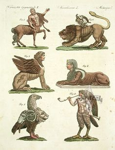 Stock Photo - Mythical creatures: centaur chimera Greek sphinx Egyptian sphinx gryllus 5 and siren Handcoloured copperplate engraving after Johann Christian Wilhelm Waitz from Myths & Monsters, Sea Monsters, Magical Creatures, Fantasy Creatures, Greek Mythical Creatures, Dragons, Legends And Myths, Greek Art, Mythological Creatures