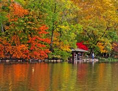 Central Park's burst of color during the fall.