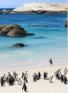 Simonstown penguins.. my home for a while