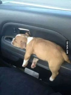 Every car door should have a puppy holder