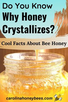 Discover why honey crystallizes, what it means and how you can fix it.  Maybe you can prevent your honey from going through this natural but gritty process.  #carolinahoneybees
