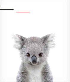 Koala print Baby animal prints Zoo animal nursery The Crown Woodland Animal Nursery, Baby Animal Nursery, Jungle Animals, Cute Baby Animals, Baby Pigs, Baby Koala, Australian Animals, Animal Prints, Blog