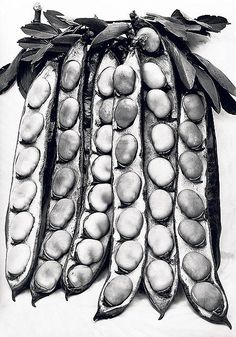Beans in the pod: a study by the gardener and photographer Charles Jones (1866-1959)