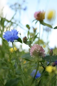 My happiest memories from the wide countryside around my family home   Cornflower & Clover