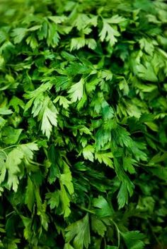 How to Freeze Fresh Parsley  Why did I know this years ago instead of throwing out so much parsley?