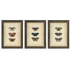 Butterfly Collection Wall Art