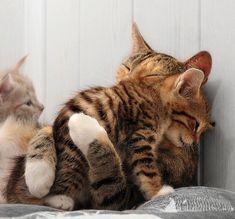 【猫好き必見】ニャンコのニャンコによるニャンコのためのキュートすぎるハグ画像25連発 | IRORIO(イロリオ) - 海外ニュース・国内ニュースで井戸端会議