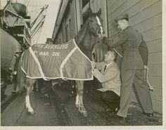 Sgt. Reckless was a hero in the Korean War, fighting alongside fellow Marine Corps troops. She won two Purple Hearts and was officially promoted as staff sergeant. On Friday, the Kentucky Oaks runs the 8th race in her honor.