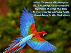 #parrot medicine