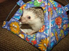 Hedgehog in a tiny tent bed - Must Have items for a Hedgehog inside of pin