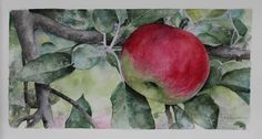 watercolor of apple with branches