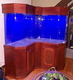 Salt Water Tank... Cool corner tank
