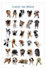 dog breeds - Yahoo Image Search Results