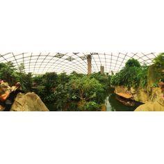 Gute Zeit #Leipzig #zoo #Gürteltier #greatbarrierreef #morgengehtsheim #goodtime by jj.chrysantheme20515 http://ift.tt/1UokkV2