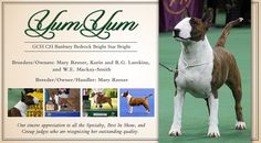 AKC National Owner-Handled Series Expanded to Specialty and Group Clubs | Best In Show Daily | 2014