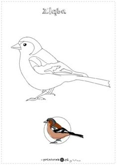 Art Drawings Sketches Simple, Bird Drawings, Easy Drawings, Adult Coloring Pages, Coloring Books, Bird Applique, In The Zoo, Bird Illustration, Pictogram