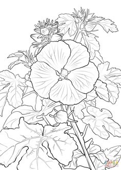 Pua Aloalo Or Hawaiian Hibiscus Coloring Page From Category Select 25994 Printable Crafts Of Cartoons Nature Animals Bible And Many More
