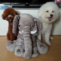 #hund #hundeliebe Poster, Teddy Bear, Toys, Animals, I Love Dogs, Activity Toys, Animales, Animaux, Clearance Toys