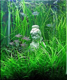 Planted tank #aquarium #livingtank #plants