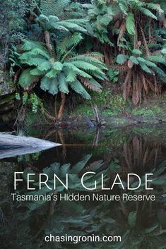 Fern Glade is a nature reserve in Burnie on the North West coast of Tasmania. This hidden reserve is the perfect place to spot the elusive Platypus. #Travel #Australia #Tasmania #Platypus #FernGlade #Burnie