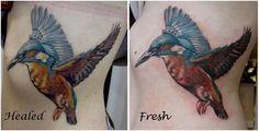 Colour Realism Colibri Tattoo by Jen #tattoos #cheltenham #cheltenhamtattoo #realism #realistic #3D #bird #colibri #birds #pretty #girly #cute #feminine #birds #hot #for #girls #women #no #regrets #studio #noregretsstudio
