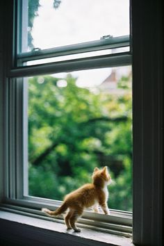 It's a Big World out there ~ Ginger Kitten looking out of the Window . It's a Big World out there ~ Ginger Kitten looking out of the Window . Ginger Kitten, Ginger Cats, Cute Kittens, Cats And Kittens, Crazy Cat Lady, Crazy Cats, Bb Chat, Funny Animals, Cute Animals