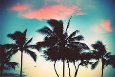 #palm #trees