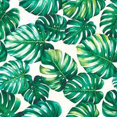Bonaire Greenery | Monstera Greenery  100 % Cotton  140 cm | 280cm Stuart Graham, Angel Wallpaper, Silver Mist, Conversational Prints, Sea Shells, Tropical Forest, Greenery, Little Monsters, Plant Leaves