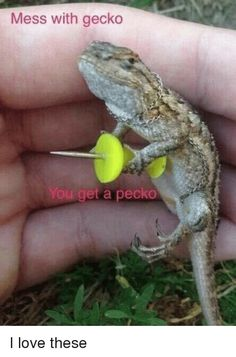 Mess with gecko You get a pecko I love these from Facebook tagged as Dank Meme