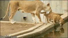 Qué hacer cuando tu hijo no se quiera bañar { GIF } #animales #caidas