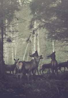 deer. click through a gif totesyourmate: Release the Freq - Gif